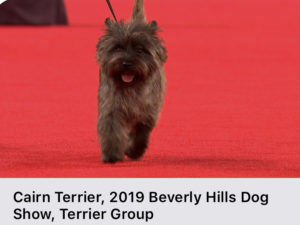 Highlights of the 2019 Kennel Club of Beverly Hills on NBC